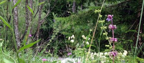 Yoga im Wald mit Sabrina am 7. August
